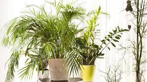 Frage Antwort Sind Pflanzen Im Schlafzimmer Schädlich N Tvde