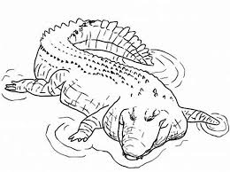 Crocodile 78 Animals Printable Coloring Pages