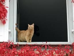 Gefahr Durch Geöffnete Fenster Katzen Können Herausstürzen Tiere