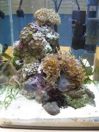 Progettazione acquariomania milano