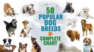 All Dog Breeds Chart 50 Most Popular Dog Breeds Complete Information Chart Petmoo