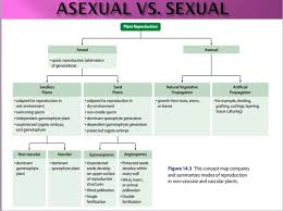 Flow Chart Of Animal Tissue Class 9 Flowchart For Sexual And Asexual Reproduction Science