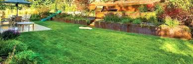 bug a salt lawn and garden bug a salt lawn and garden appealing thick green grass bug a salt lawn and garden