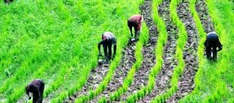 Oyo State distributes 25 tons of fertiliser to farmers to boost production - Agriculture News