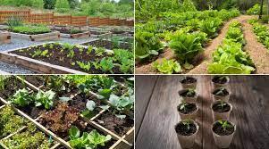 vegetable gardening for beginners