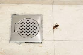 tiny black bugs in bathroom tips