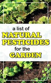 natural pest control for vegetable gardens all natural pesticide for vegetable garden medium size of organic