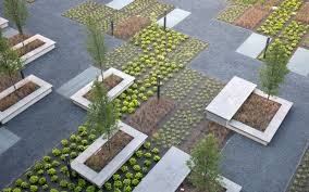 plant beds with sedum and small trees between walkways