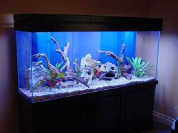 Fish Tank Accessories And Decorations Best Fish Tank Decorations Aquaria Pinterest Fish tanks 6