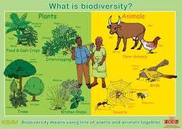 essay on biodiversity conservation biodiversity