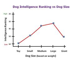 Are Big Dogs Smarter Than Small Dogs Healthy Paws