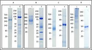 native gel electropsis