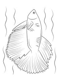 Halfmoon Betta Fish Coloring Page Free Printable Coloring Pages