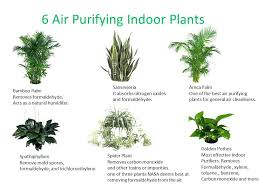 indoor plants with names indoor plants names which plant do you need in your indoor space indoor plants with names