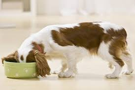 Pup Food Meant for Normal, Picky, Fat, Skinny And Diabetic Dogs Formula