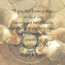 Quotes About Dogs And Friendship Impressive Dog Quotes We Rounded Up The Best Of The Best
