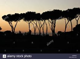Breathtaking Photos A Breathtaking Silhouette Of Roman Pines At Sunset Roma Rome