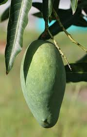 Fruit Trees For North Florida
