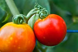 tips for growing the perfect vegetable