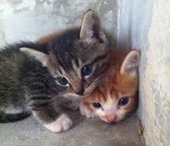 redwire singapore kittens maybe eaten