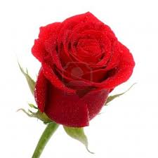 1200x1200 red rose images