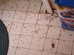 cabinet. small ants in kitchen: Exellent Ants In Kitchen Cabinets ...