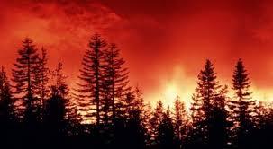 Znalezione obrazy dla zapytania pożar lasu w kuźni raciborskiej