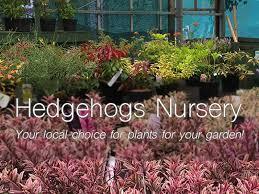 hedgehogs nursery and garden centre