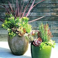 winter plants thumb of or home depot for plants winter plants garden pots planters large backyard home depot garden