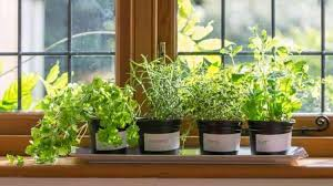 15 Fun and Easy Indoor Herb Garden Ideas