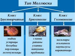 Реферат на тему класс двустворчатые моллюски > документы от  Реферат на тему класс двустворчатые моллюски