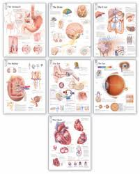 Body System Wall Chart Set Scientific Publishing