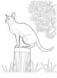 Cats Coloring Pages For Teens And