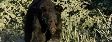 Bear Communication - BearSmart.com