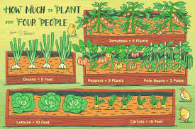 to plant per person in the vegetable garden