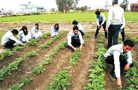 Colleges Of Agriculture B Sc Agriculture Degree Courses Colleges In Dehradun Ucbmsh