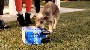 Bud Light Dog Driving Commercial Bud Light Super Bowl Ad Rescue Dog