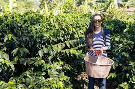 Red and green coffee cherries. Doka Estate Coffee Tour Alajuela Costa Rica