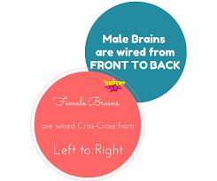 similiar brains brains boys versus girls keywords female brain vs male brain wiring superbaby