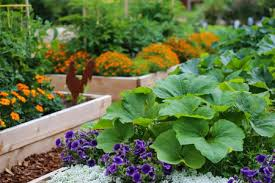 vegetable gardening in a small space