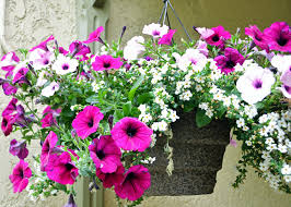ideas best outside hangings porch for winter backyard garden stakes stupendous hanging plants