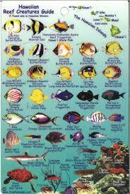 Oahu Fish Chart Hawaiian Fish Reef2reef Saltwater And Reef Aquarium Forum