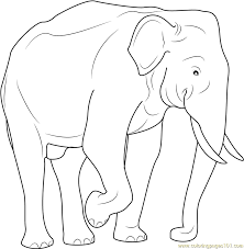 Indian Elephant Coloring Pages Printable Color Bros