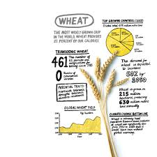 why we will need genetically modified foods mit technology review earth system science at stanford university has a calm demeanor that belies his bleak message about how global warming is already affecting crops