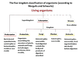 Plant Kingdom Classification Chart For Kids 56 Clean Flow Chart Of Plant Kingdom