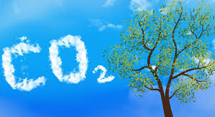 Trees and Carbon Dioxide: What Is the True Connection? | by R. Philip Bouchard | The Philipendium | Medium