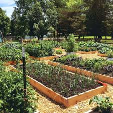 RAISED BEDS  raised-beds