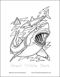 Small Picture Shark Wordsearch Vocabulary Crossword and More
