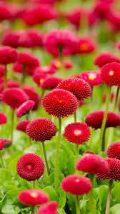Flower Wallpaper HD for Android - APK ...