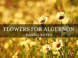 flowers for algernon theme yahoo the best flowers ideas introducing flowers for algernon instructions each slide